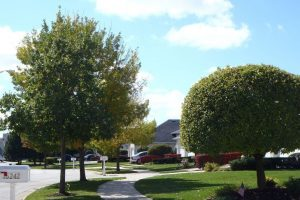 Nogas Landscaping- trees and shrubs