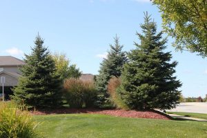 Nogas Landscaping- tree service